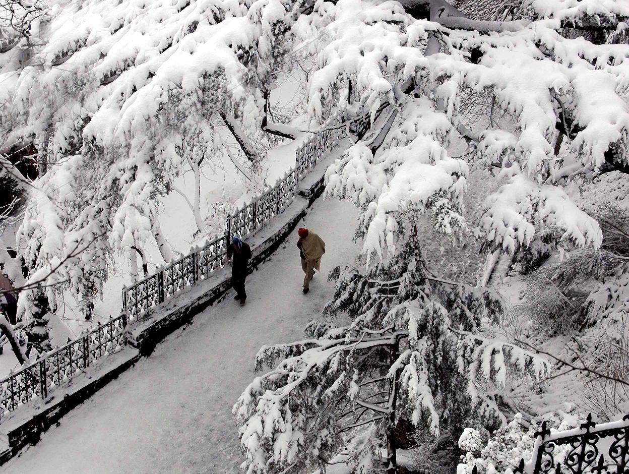 Thick snow seen on the trees and roads, in Shimla on Friday. Photo By: Amit Kanwar